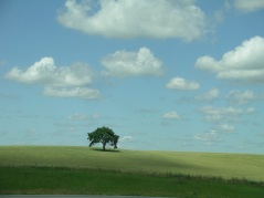 lone-tree-poster