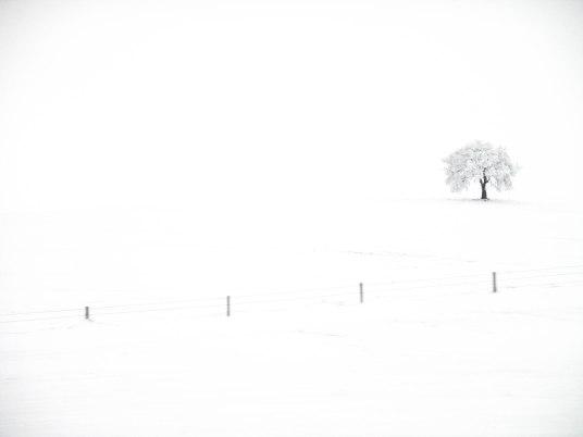 Winter White (1 of 1)
